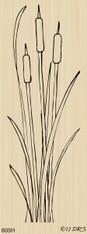 Long Tall Cattails - 605H