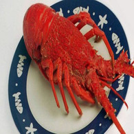 Crayfish or Cooked Rock Lobster