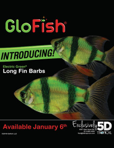 GLOFISH® BARB - LONGFIN ELECTRIC GREEN®