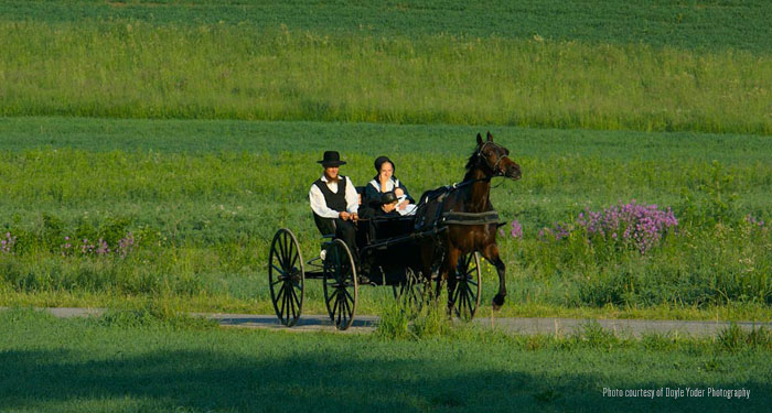 Who are the Amish
