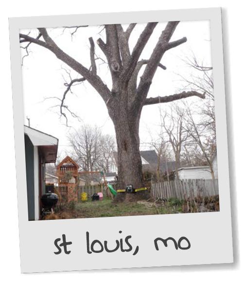 The Amazing Story of the Gateway Walnut Tree
