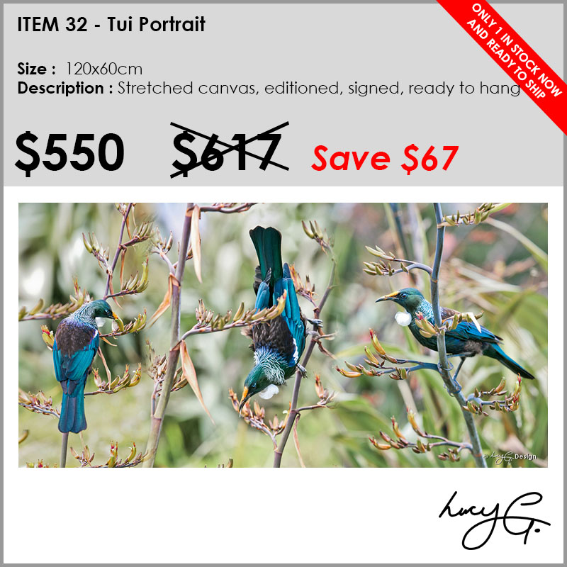 32-tui-portrait-colour.jpg