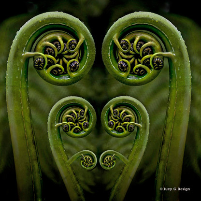 FERN FROND\' - NZ koru printed glass wall art / photo print for sale ...