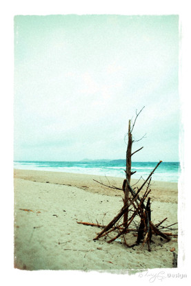 Rugged beachscape photo with driftwood hut, NZ art print for sale by Lucy G.