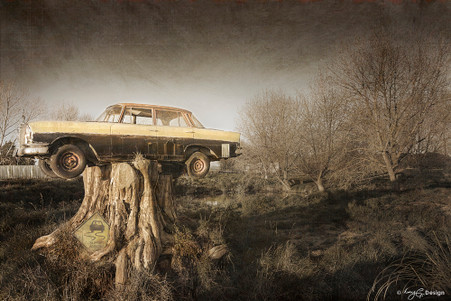 Hamilton, New Zealand, landscape photograph of car on top of tree stump, art print for sale.