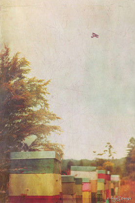 Vintage photo art featuring colourful old NZ beehives and plane, art print for sale.