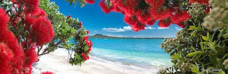 Glendowie, Auckland, NZ - Pohutukawa and Rangitoto landscape photography print for sale