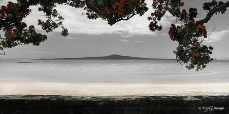 Rangitoto and Pohutukawa landscape photograph from Kohimarama, Auckland, NZ -print for sale.