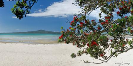 Rangitoto and Pohutukawa landscape photograph from Kohimarama, Auckland, NZ - print for sale.