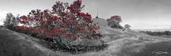 Cornwall Park, Pohutukawa trees and One Tree Hill, Auckland, New Zealand - landscape print for sale.
