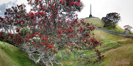 One Tree Hill,  Pohutukawa trees at Cornwall Park, Auckland, New Zealand - landscape print for sale.