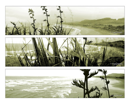 West Coast, Muriwai Beach, Auckland, NZ -  panoramas showing flax and beach - landscape photo / art / print for sale.