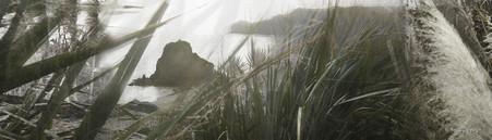 Lion Rock, Piha, Auckland, New Zealand - landscape photography print for sale.
