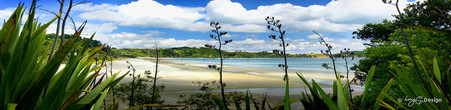 Onetangi Beach, Waiheke Island, NZ - panoramic landscape photo print for sale by Lucy G
