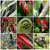 NZ Nature, photo print collage featuring New Zealand native Nikau, Flax, fern frond with Saddleback and Tui.
