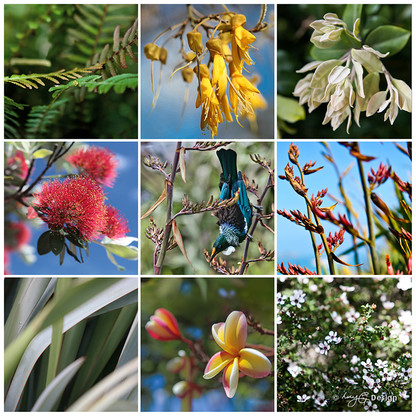 NZ Flowers, photo print collage featuring New Zealand Tui, Kowhai, Pohutukawa, Flax and Manuka flowers.
