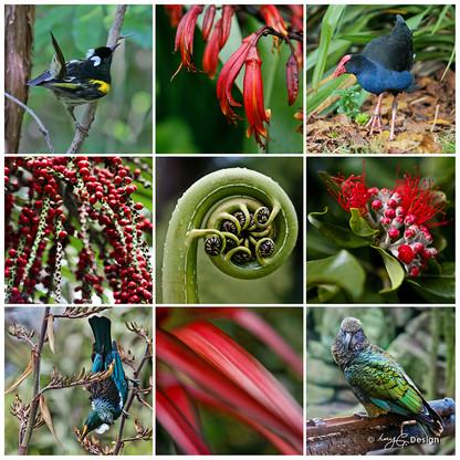 NZ Birds, photo print collage with NZ  Tui, Pukeko, Stitchbird and Kea with fern frond and Nikau.