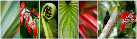 NZ photo print collage for sale featuring NZ Flax, fern fronds, Saddleback bird & Pohutukawa.