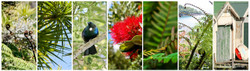 NZ photo print collage for sale featuring Cabbage Tree, Tui, fern frond, Pohutukawa and boatsheds.