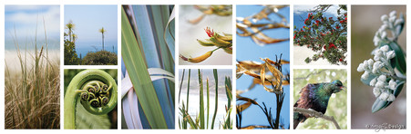 Aotearoa, photo print collage for sale featuring NZ Tui, fern fronds, Pohutukawa, cabbage trees and sand dunes.