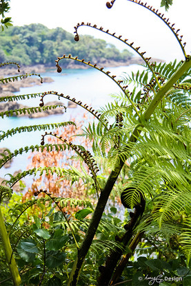 NZ fern frond frames a remote beach - photo art / canvas print for sale by Lucy G.