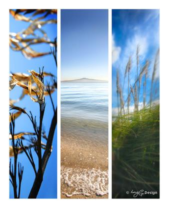 Set of 3 beautiful New Zealand landscape photos, NZ Flax, Rangitoto beach scene and Toi Toi.