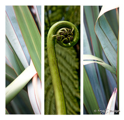 Set of 3 beautiful New Zealand nature photos, NZ flax leaves and NZ fern frond Koru.
