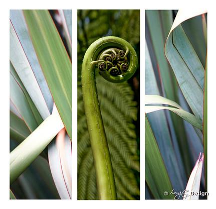 Set of 3 beautiful New Zealand nature photos, NZ flax leaves and NZ fern frond Koru.