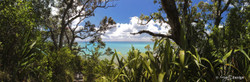 DAYDEAMING' (to 1.8m+) - Long Bay, Auckland, NZ, landscape photo (canvas wall art / print)