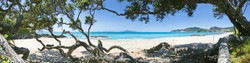 Langs Beach, Bream Bay, Northland, NZ showing Pohutukawa and sea - landscape photo print for sale