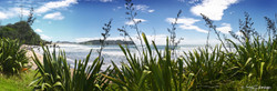 Hot Water Beach, Coromandel, NZ, showing flax, beach and sand - landscape photo print for sale.