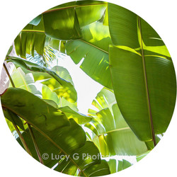 Round wall decal - 'Tropical Plants 8'
