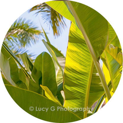 Round wall decal - 'Tropical Plants 5'