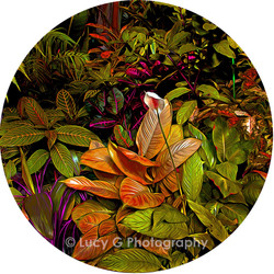 Round wall decal - 'Tropical Plants 2'