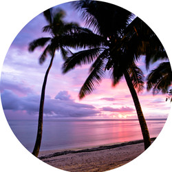 Round wall decal - 'Palms 1'