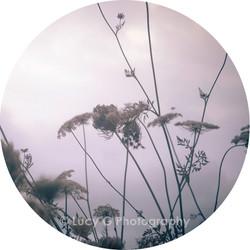 Round wall decal - 'Enchanted Garden 4'