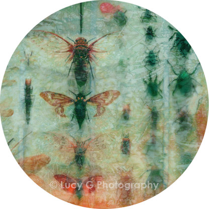 Round wall decal - 'Gossamer Wings'