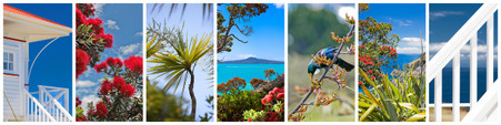 NZ photo print collage for sale - Pohutukawa, Cabbage Tree, Rangitoto, Tui, Beach House, sea