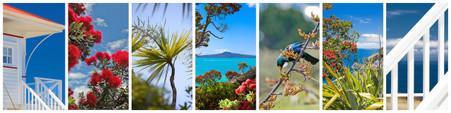 NZ photo print collage for sale - Pohutukawa, Cabbage Tree, Rangitoto, Tui, Beach House, sea