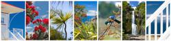 NZ photo print collage for sale - Pohutukawa, Cabbage Tree,  Tui, Beach House, sea