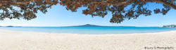 Rangitoto and Pohutukawa landscape photograph from Kohimarama, Auckland, NZ - print for sale.