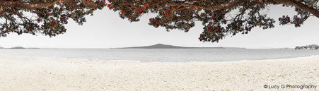 Pohutukawa Rangitoto beach scene, Kohimarama, Auckland - photo wall art print for sale