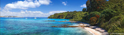 Tiri Tiri Matangi Island, Pohutukawas and beach scene - landscape photo wall art print for sale