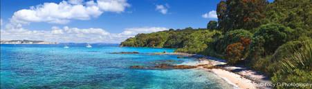 Tiri Tiri Matangi Island, Pohutukawas and beach scene - landscape photo wall art print for sale