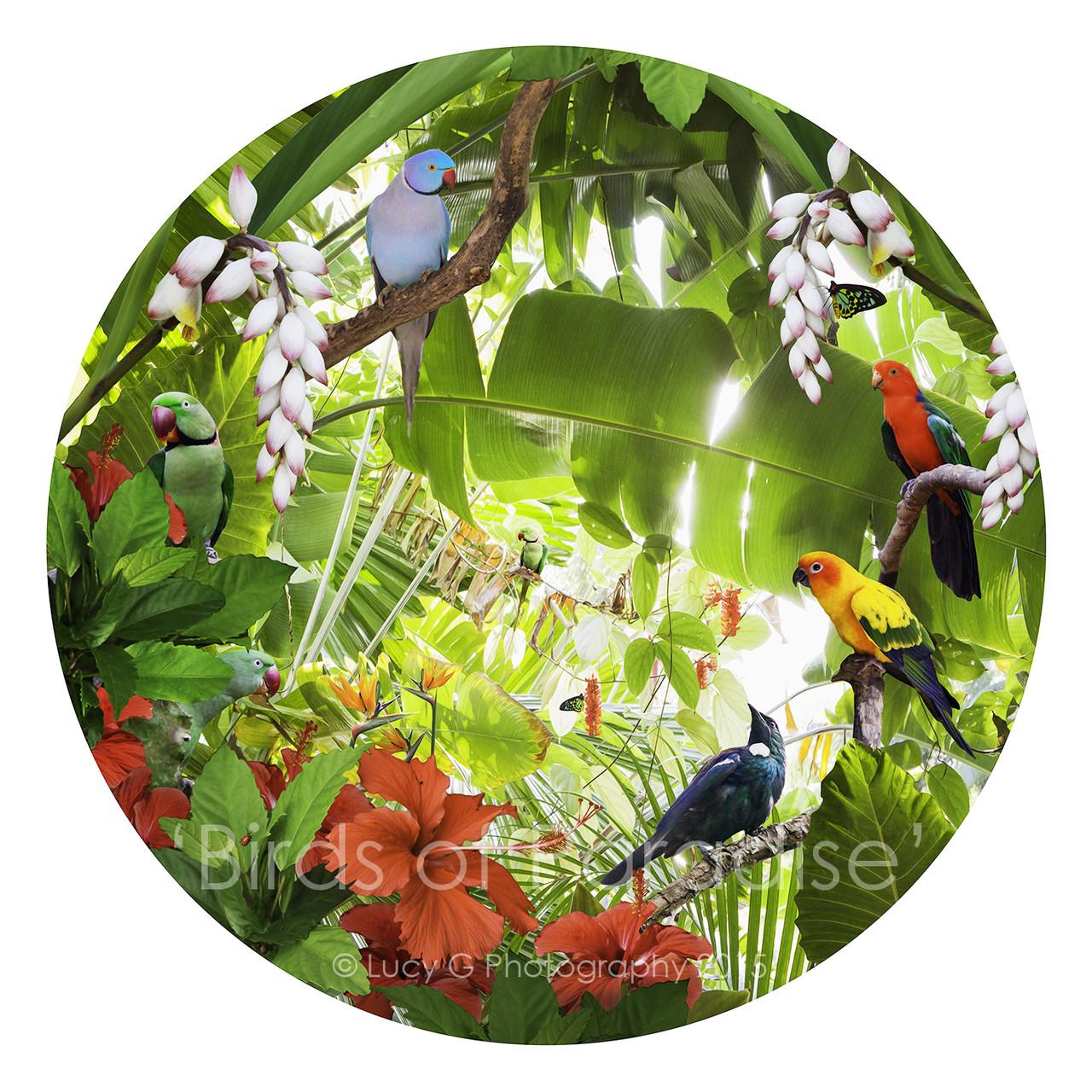 birds of paradise hook up