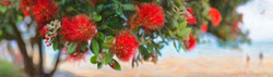 NZ Pohutukawa flowers and beach - New Zealand art print / canvas photo print for sale by Lucy G.