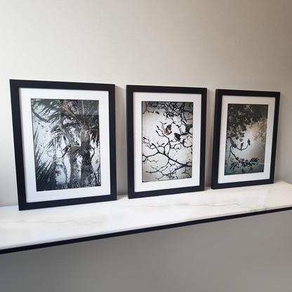 Set of 3 x silver foil NZ bird prints