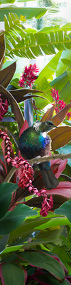 NZ Tui photo art print / wall art for sale by Lucy G