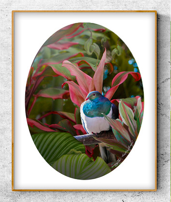 NZ Wood Pigeon in tropical garden setting - oval photo art print / wall art for sale
