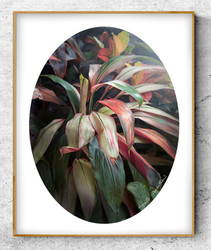 A lush tropical botanical print with leaves and ladybird -oval photo art print / wall art for sale